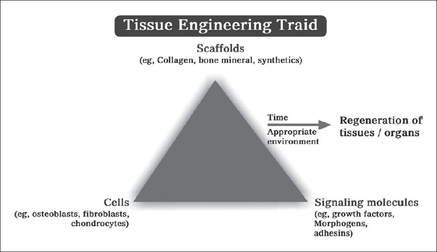 Figure 1: Tissue engineering triad that includes cells, scaffolds, and signalling molecules. This triad is essential for regeneration[1]