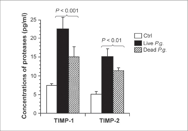 Figure 8: Live P gingivalis increased TIMP-1 and TIMP-2 protein production by osteoblasts. Following osteoblast culture in the presence or absence of live and heat-inactivated P gingivalis (107 bacteria), cultured supernatants were collected and used to quantify TIMP-1 and TIMP-2. Culture medium was fi ltered through 0.22 ìm fi lters and used to determine the amount of the secreted TIMP-1 and TIMP-2 using ELISA kits. Data are the means ± SD of four separate experiments. The levels of signifi cance relate to the differences between the values obtained from the P gingivalis-infected and noninfected cultures