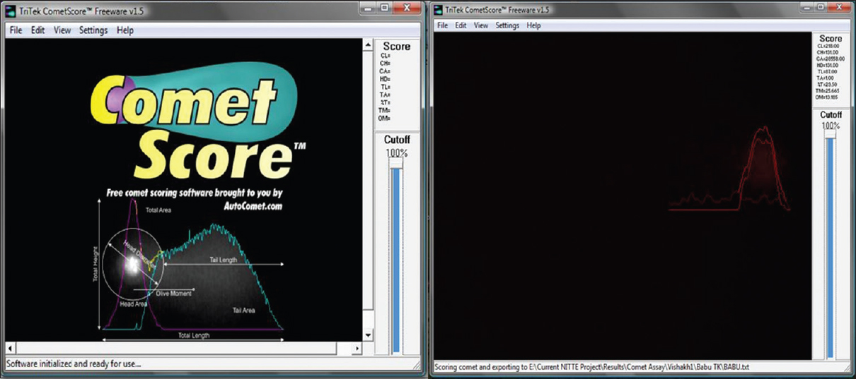 Figure 3: Display image of the pattern of scoring the comet using Comet Score Software